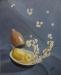 apesanteur - raisins